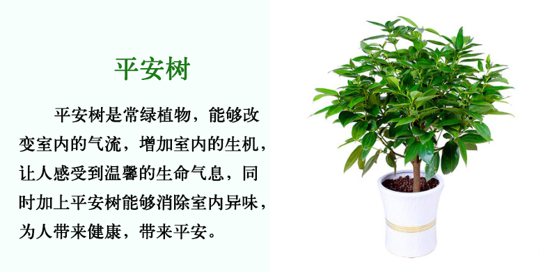 深圳花卉出租