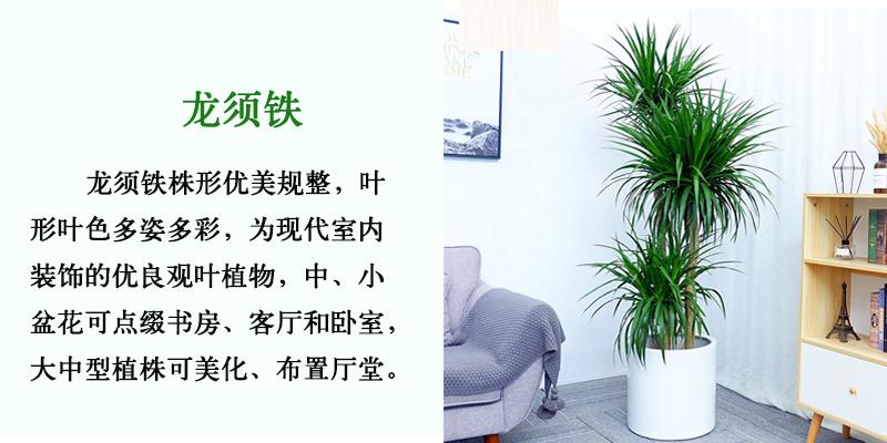 福田绿植租赁